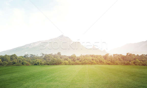 Zöld nyár édenkert természetes tájkép mező Stock fotó © adam121