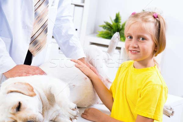Сток-фото: девушки · собака · ветеринарный · клинике · ветеринар · любви