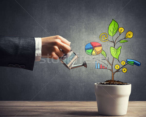 Drawn income tree in white pot for business investment savings a Stock photo © adam121