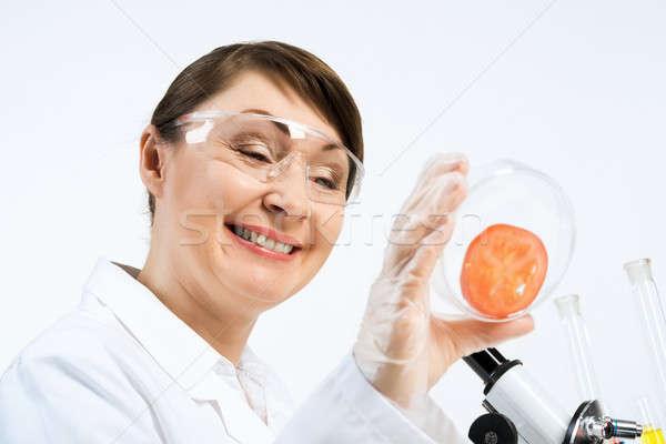 Stockfoto: Controleren · wetenschapper · tomaat