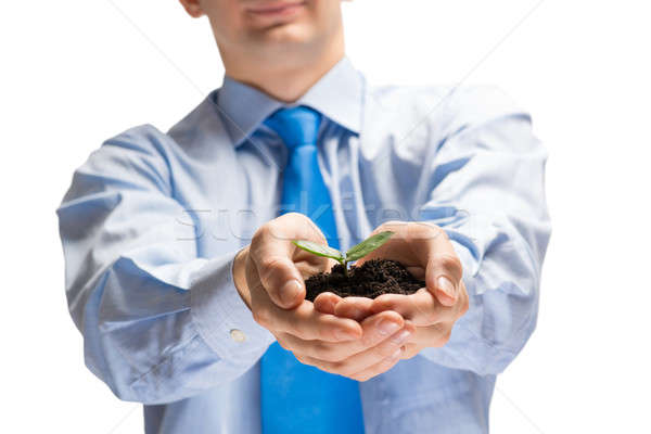 Sprout in hands Stock photo © adam121