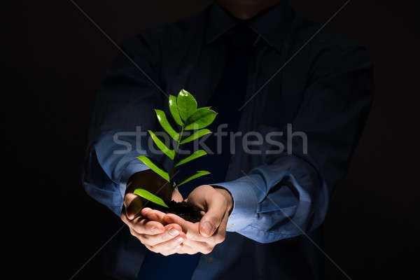 Stock photo: Sprout in hands