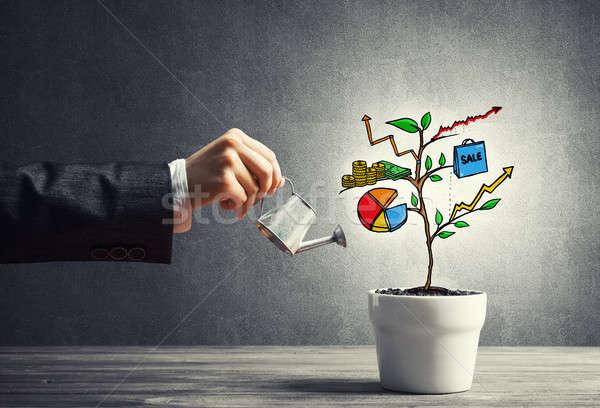 Reddito albero bianco pot business Foto d'archivio © adam121