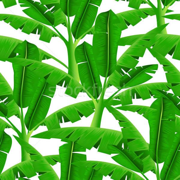 Verde tropicales palmeras blanco hierba Foto stock © adamfaheydesigns