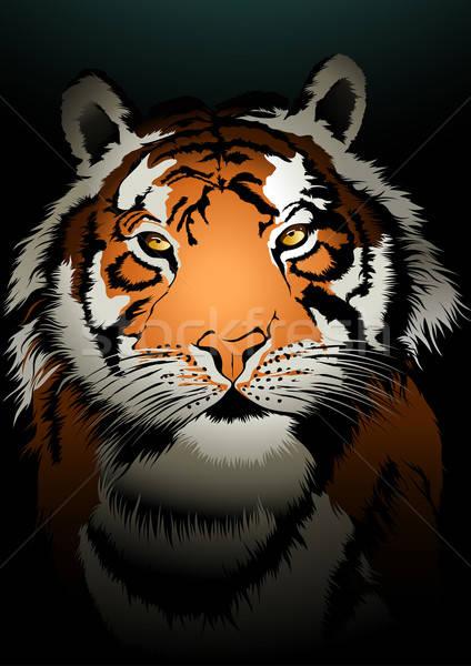 Tigre viendo oscuro ilustración luz naranja Foto stock © adamfaheydesigns