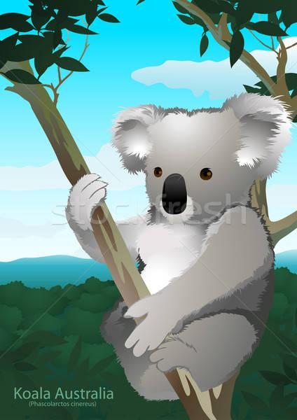 Koala posiedzenia guma drzewo Australia górskich Zdjęcia stock © adamfaheydesigns