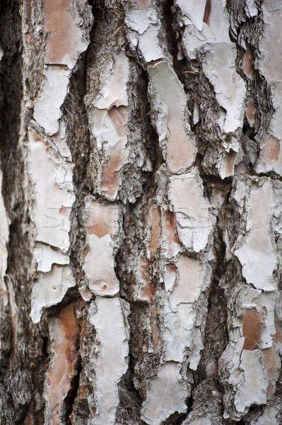 Havlama ağaç arka orman şube kahverengi Stok fotoğraf © advanbrunschot