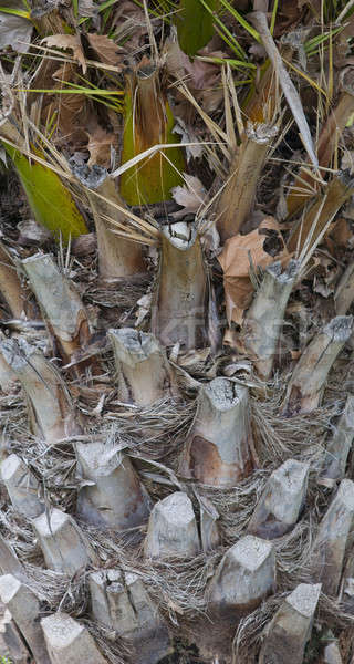 Corteza árbol fondos bosques rama marrón Foto stock © advanbrunschot