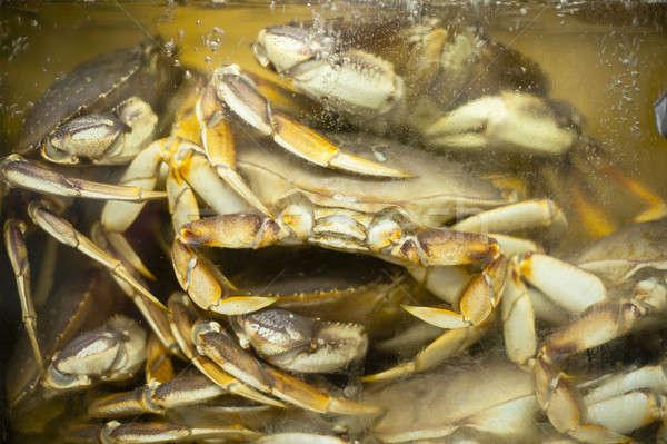 Cangrejo espera alimentos mercado natación acuario Foto stock © advanbrunschot