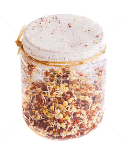 Top View of Sprouting Radish Seeds Growing in a Jar Stock photo © aetb