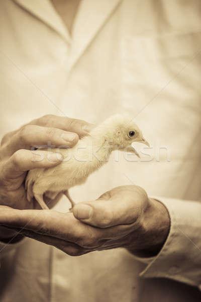 Agriculteur bébé Turquie nature temps Photo stock © aetb