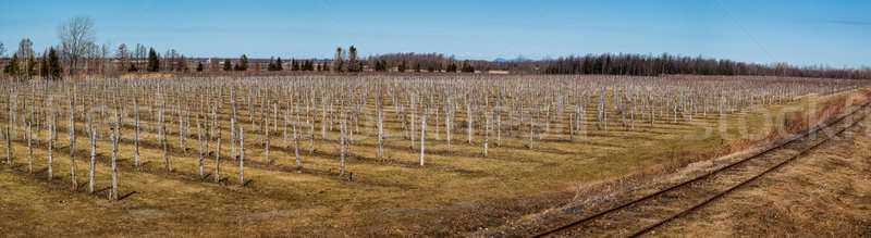 Winery in Canada, Quebec on the Spring Stock photo © aetb