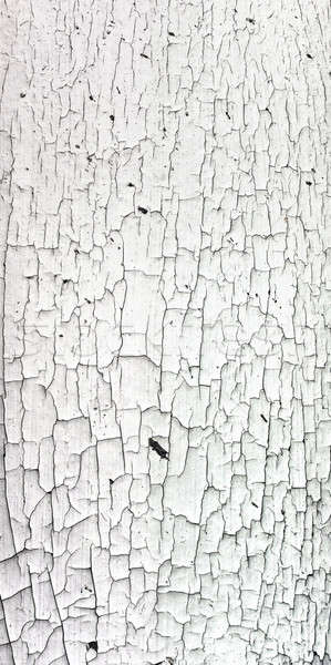 Old cracky white paint texture on wood  Stock photo © aetb