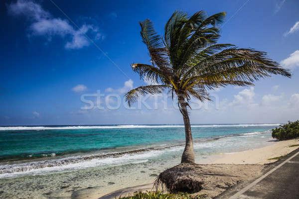 Big Palm Tree Facing the Beach Stock photo © aetb