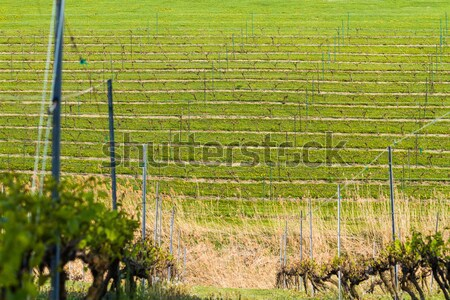 Stock photo: Winery Field