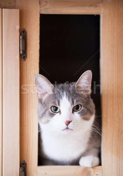 Cat cucina guardando fotocamera legno occhi Foto d'archivio © aetb