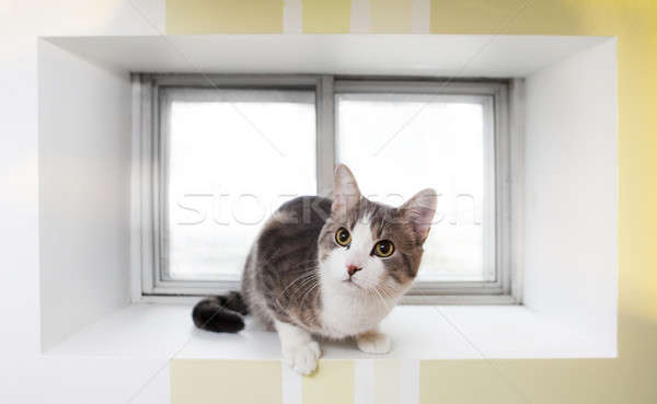 Kat venster Stockfoto © aetb