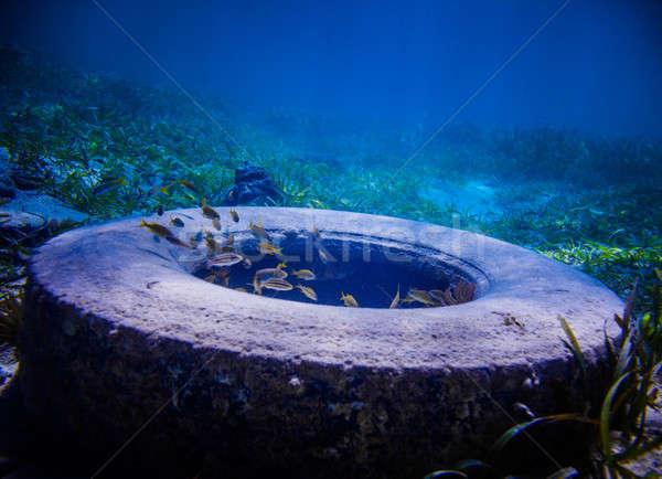 Opon podwodne wiele ryb około morza Zdjęcia stock © aetb