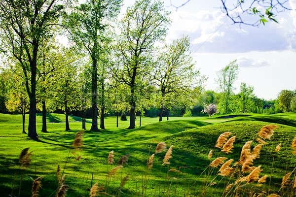 старые красивой гольф гольф лес закат Сток-фото © aetb