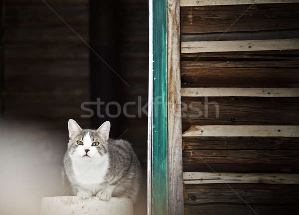 Cat Guarding the country house !  Stock photo © aetb