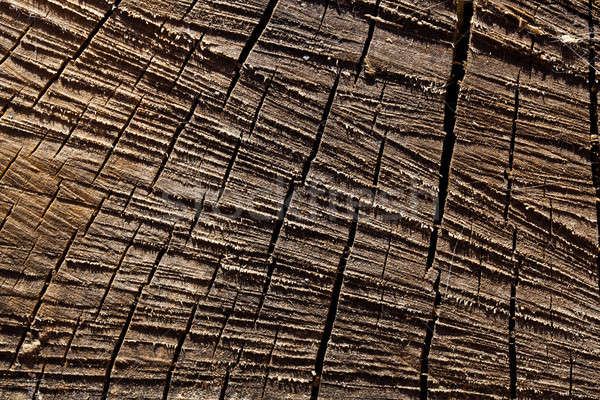 Macro sawed and dry wood texture with details Stock photo © aetb