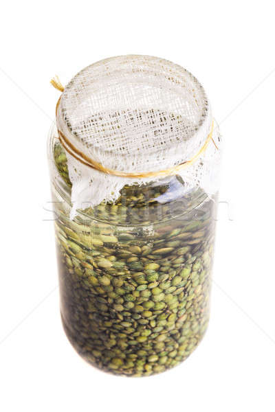 Soaked Sprouting Seeds (green Lentils) Stock photo © aetb