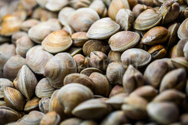 Clams in the Fish Counter of a Restaurant Stock photo © aetb