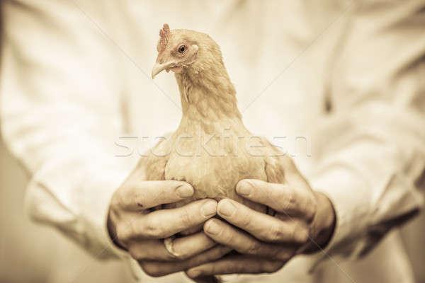 Landbouwer beige kip boerderij natuur Stockfoto © aetb