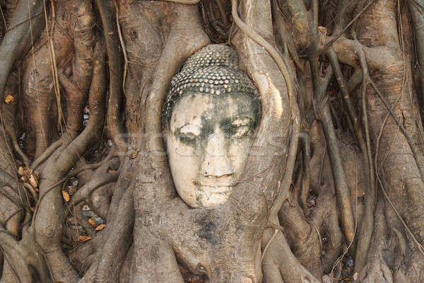 Head of Sandstone Buddha in The Tree Roots Stock photo © AEyZRiO