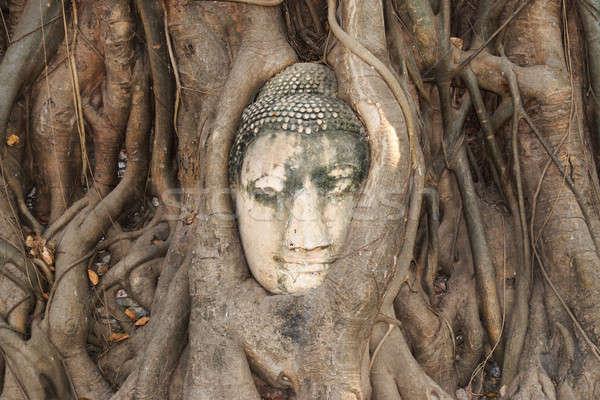 Hoofd zandsteen buddha boom wortels steen Stockfoto © AEyZRiO