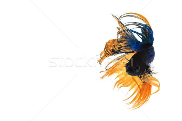 Pesce isolato bianco natura bellezza Foto d'archivio © AEyZRiO