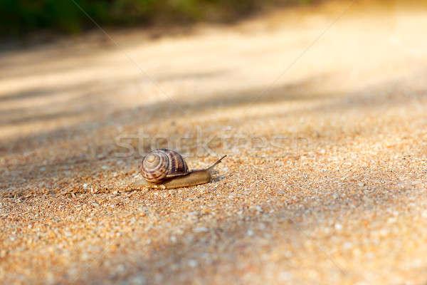 улитки вперед Top мелкий снарядов Сток-фото © Agatalina