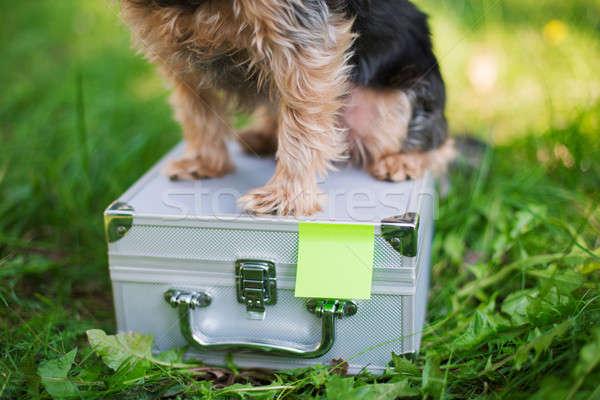 Yorkshire Terrier sitting on tin suitcase Stock photo © Agatalina