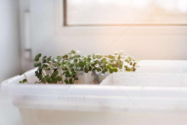 Stockfoto: Vensterbank · dienblad · voedsel · zon · plantaardige · organisch