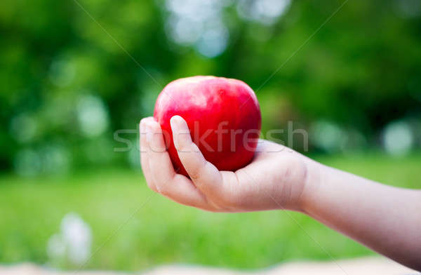 Apple in one hand  Stock photo © Agatalina