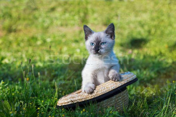 тайский Cute котенка соломенной шляпе сидят трава Сток-фото © Agatalina