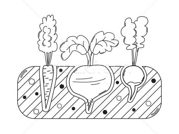 тонкий линия садоводства кровать овощей морковь Сток-фото © Agatalina