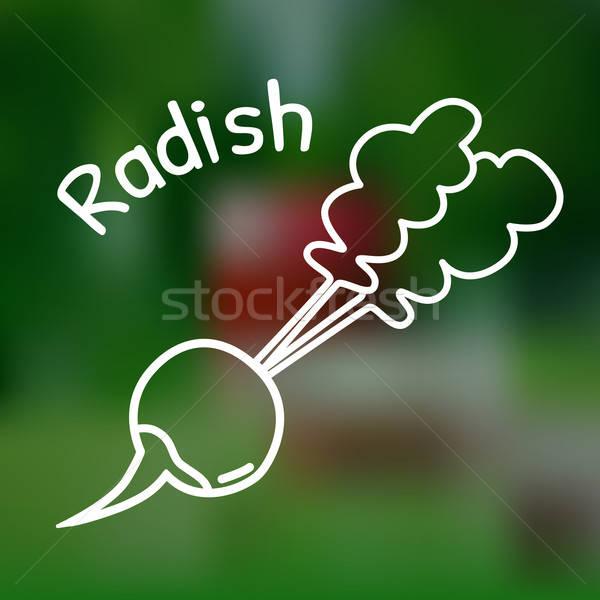 Thin line radish icon Stock photo © Agatalina