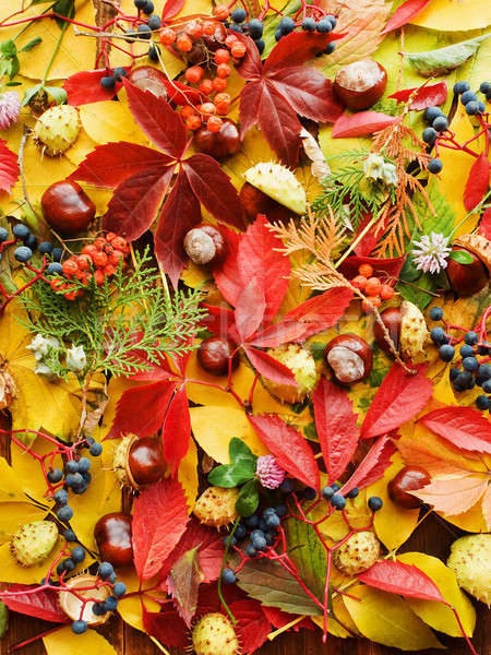 Beautiful fall background Stock photo © AGfoto