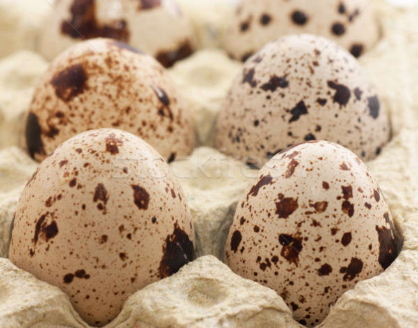 Quail eggs Stock photo © AGorohov