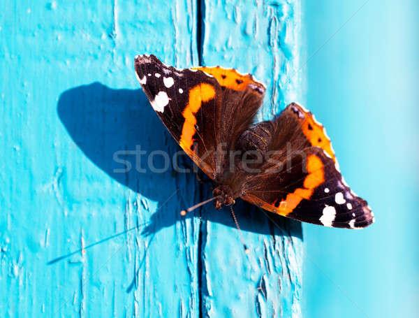 Pillangó közelkép kilátás kék fából készült deszkák Stock fotó © AGorohov