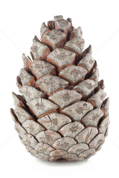 The cone Stock photo © AGorohov