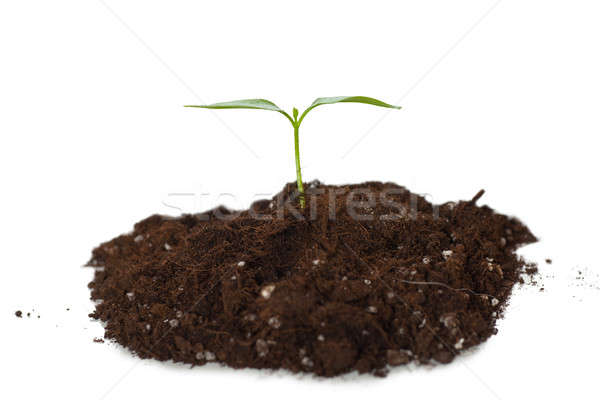 Plant Stock photo © AGorohov