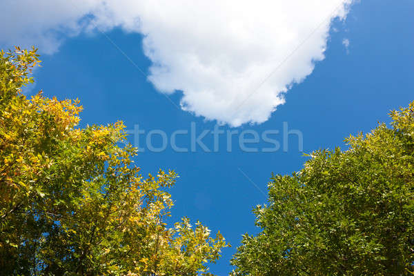 Heavenly love Stock photo © AGorohov