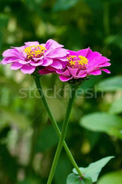 Flowers Stock photo © AGorohov