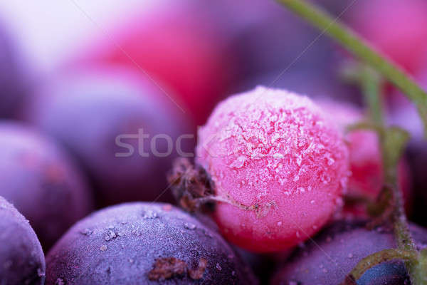 Congelés baies macro vue groseille myrtille Photo stock © AGorohov