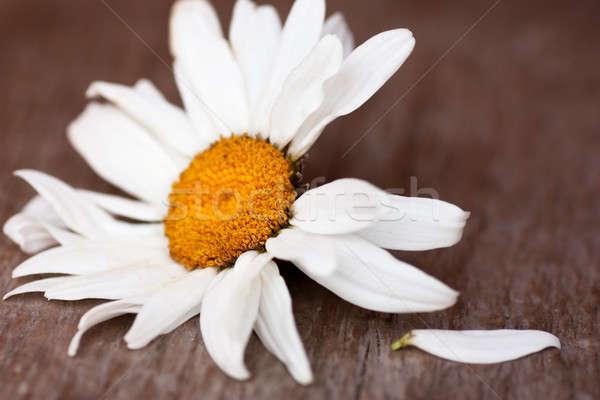 Kamille Holzfußboden ein Blütenblatt aus nicht Stock foto © AGorohov
