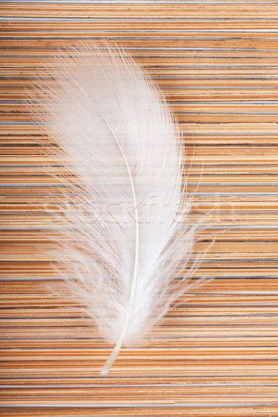 Feather Stock photo © AGorohov