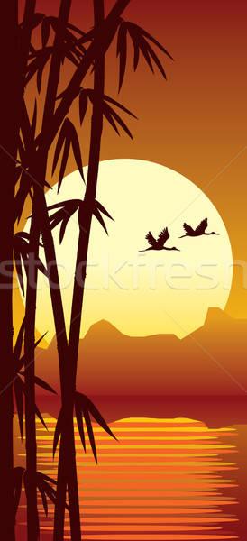 Bambusa wygaśnięcia lasu wody zachód słońca drzewo Zdjęcia stock © Aiel