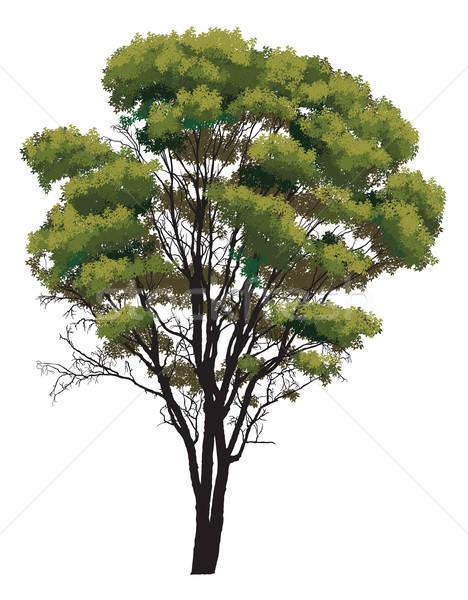 Green tree  Stock photo © Aiel